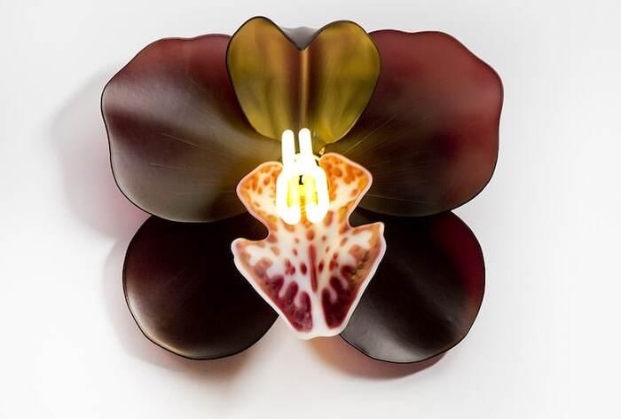 Les orchidées en verre illuminées célèbrent la force délicate des fleurs exotiques