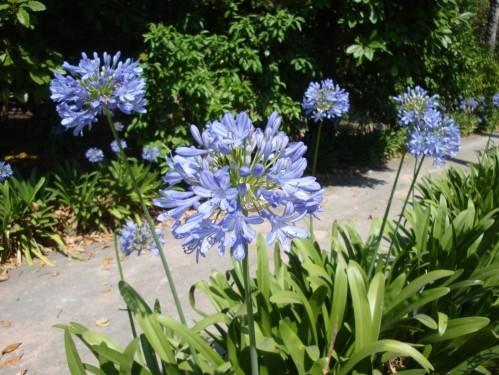Jardin botanique de Palerme g