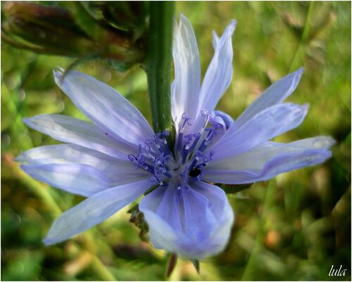 Flore du Québec