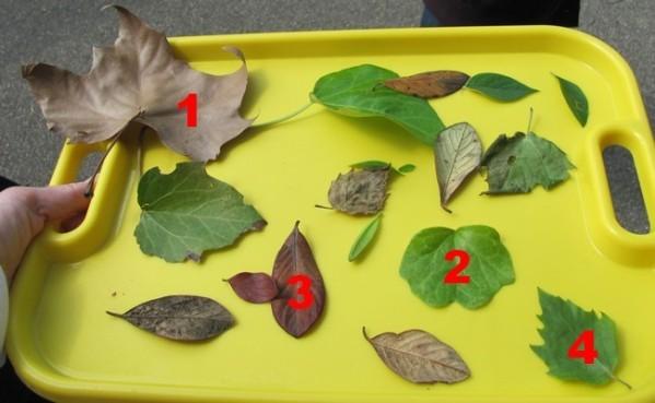feuilles-identification-a.jpg