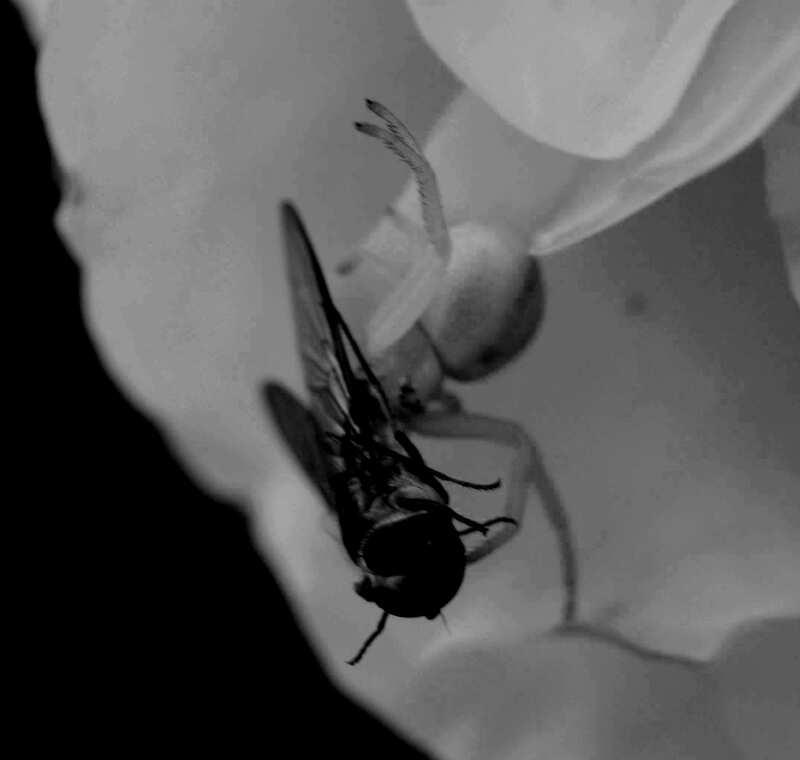 Quand un insecte en cache un autre !