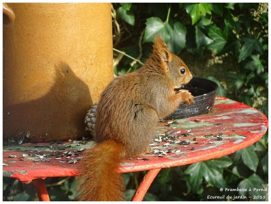 La table est bonne pour Monsieur l'écureuil