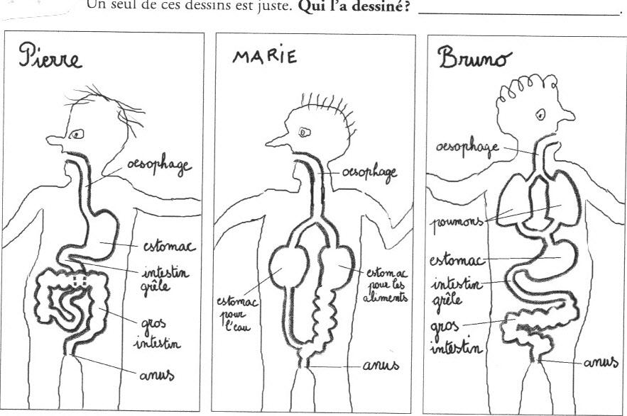 Bien-aimé L'appareil digestif - Ressources pour les enseignants de CM2 SK72