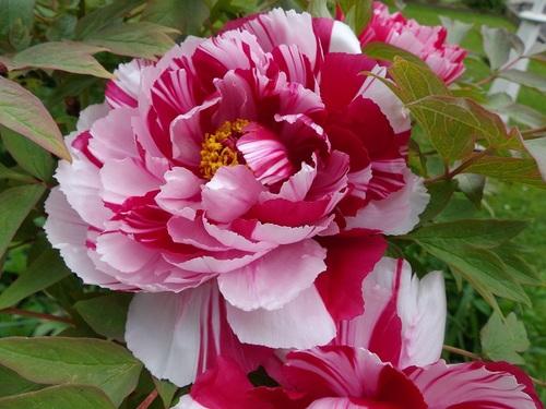 une beauté au jardin....