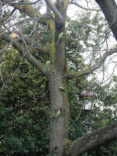 albero.JPG_20094520231_albero.JPG