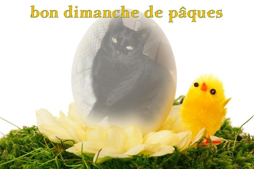 bon dimanche de pâques à tous