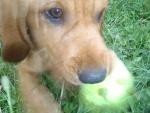 J'aime jouer !