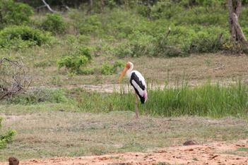 Tissamaharama et le parc de Yala du 25 au 26 février 2015