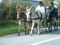 Fête de l'âne 2011