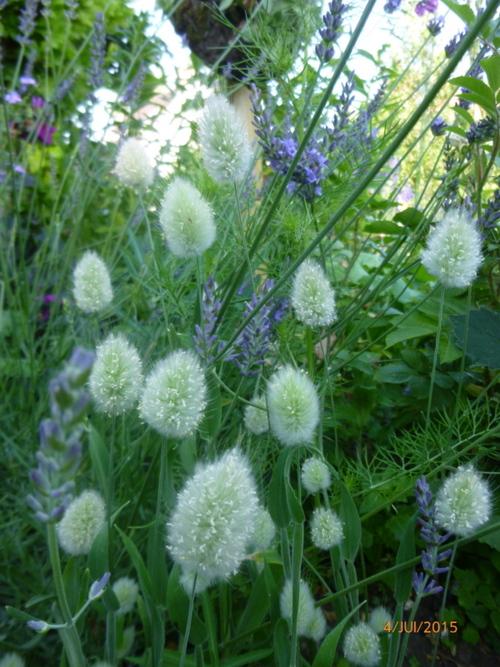Floraisons d'été (2ème partie)