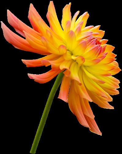 Fleurs Tige Série 9