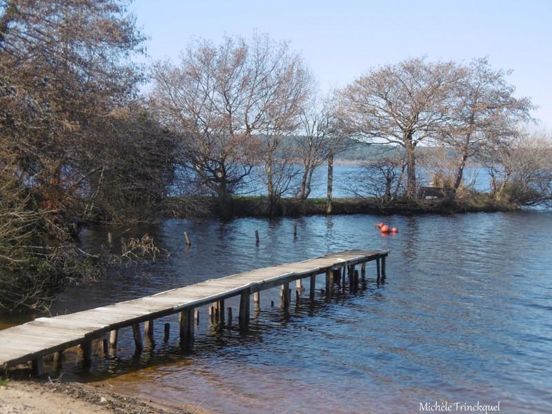 Une balade au Lac le 6 février (suite n°2 et fin)...