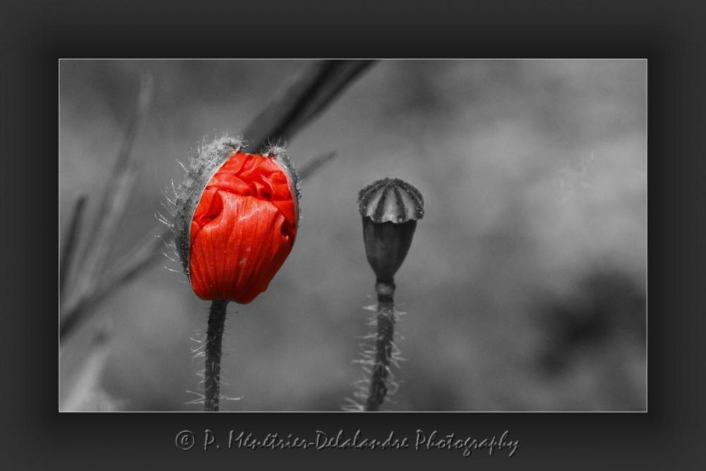 En rouge et gris...