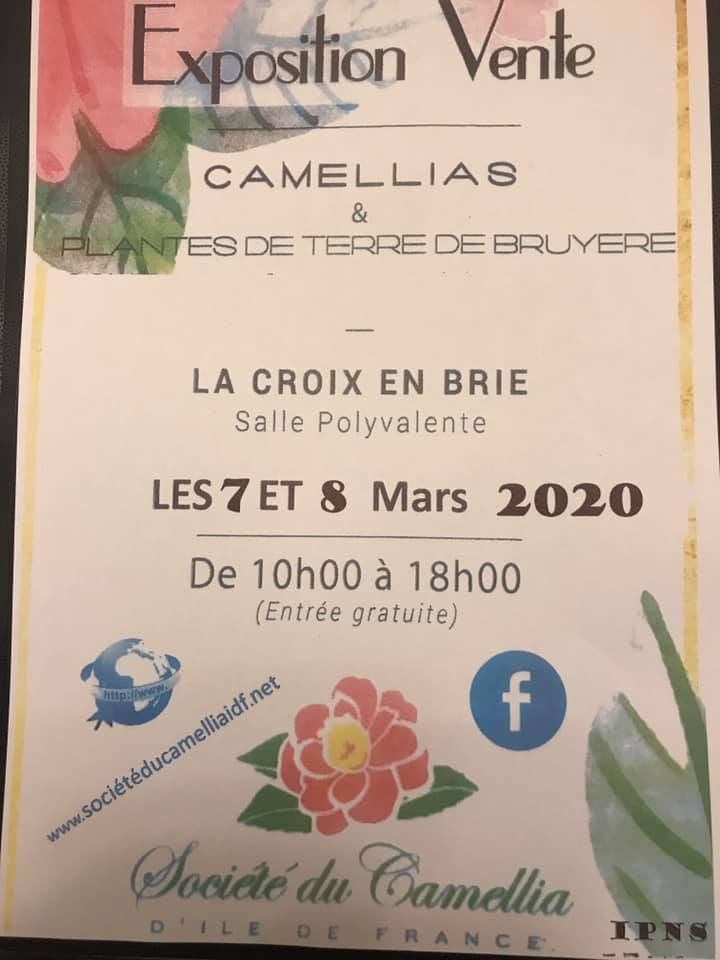 Exposition CAMELIAS