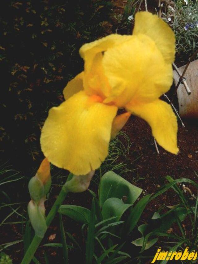 Nouveau au jardin et en fleur