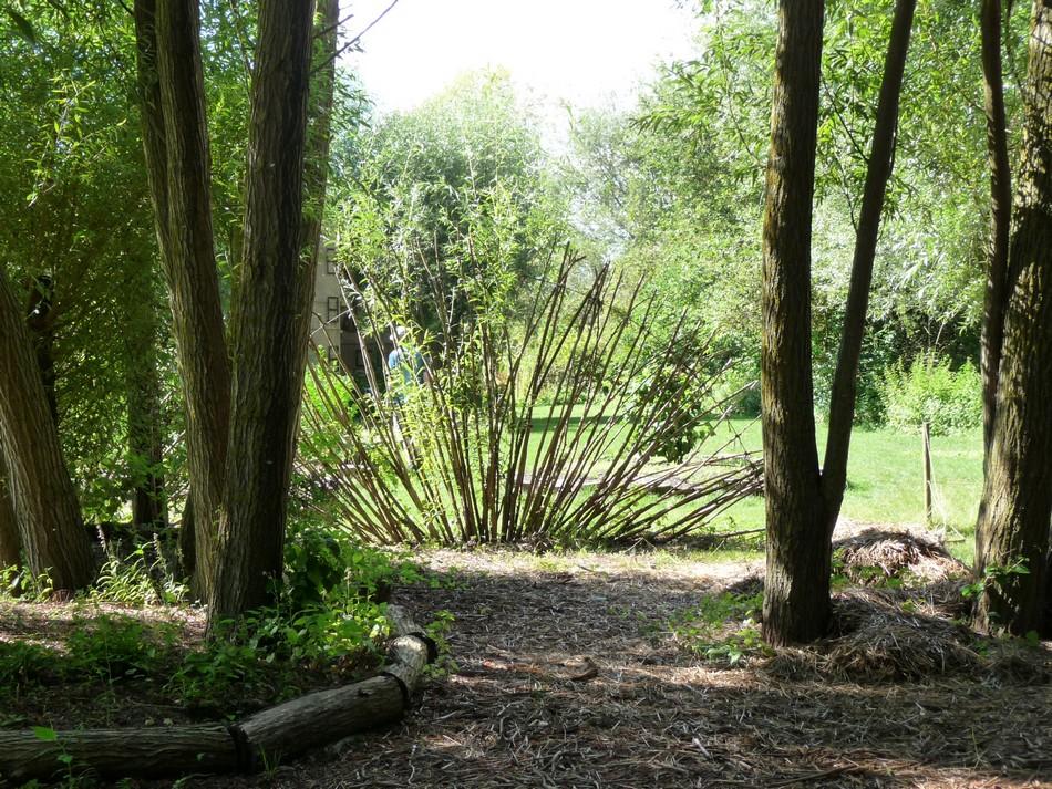 Le Jardin des Vertueux (suite)
