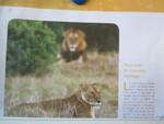 Exposé sur les lions