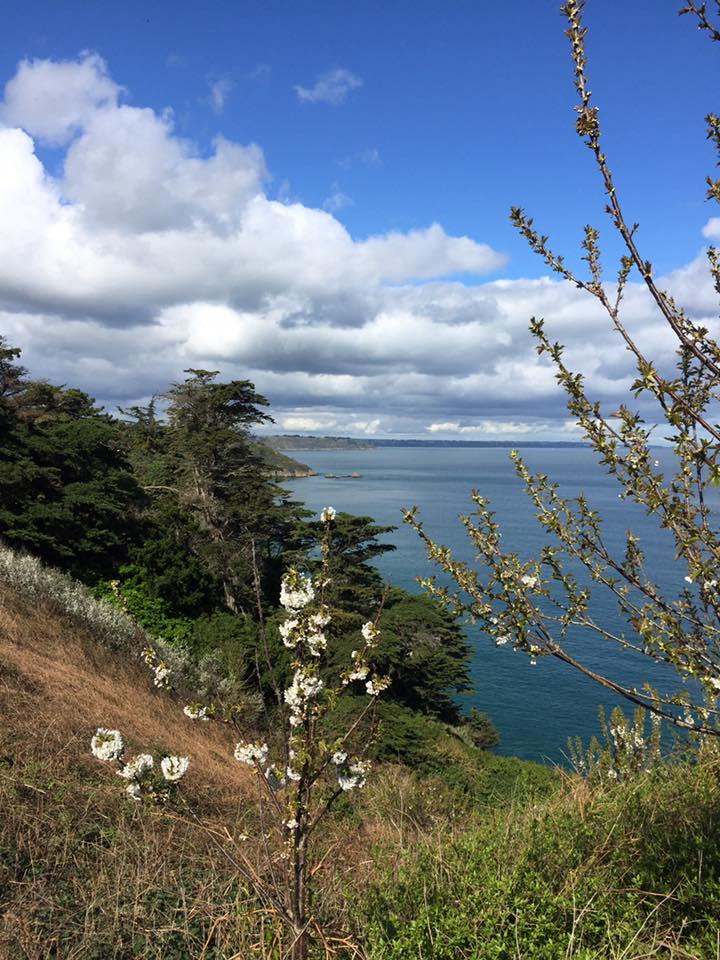 L'image contient peut-être: nuage, ciel, arbre, plante, océan, herbe, plein air et nature