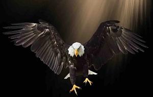 Le silence des ailes ...