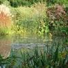 bassin-jardin-DSC00872.jpg