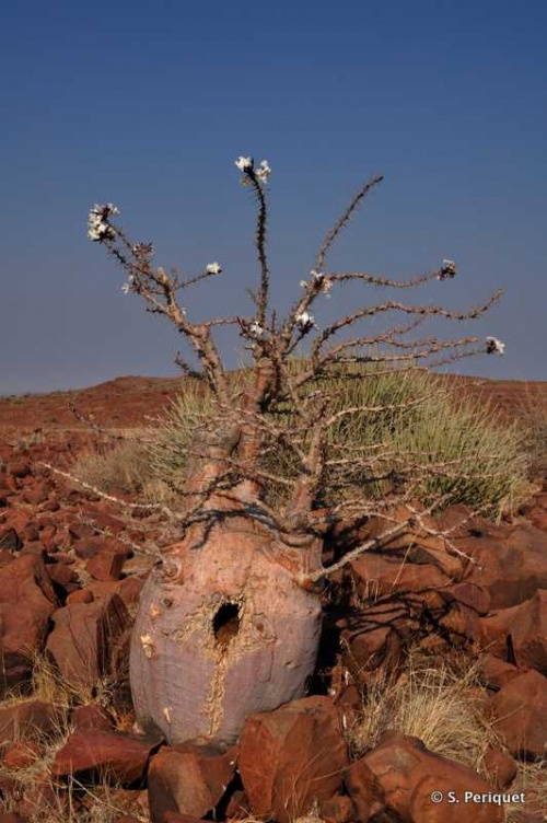 Himba Country - Towards Opuwo