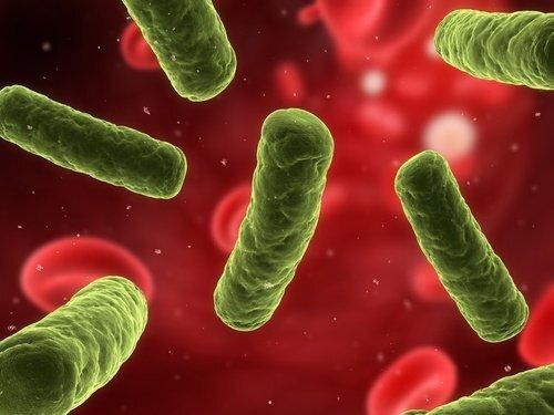 renforcer-le-systeme-immunitaire-500x375