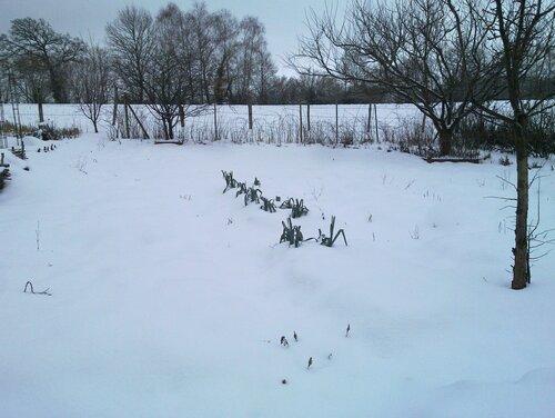 Sous la neige, la vie continue...