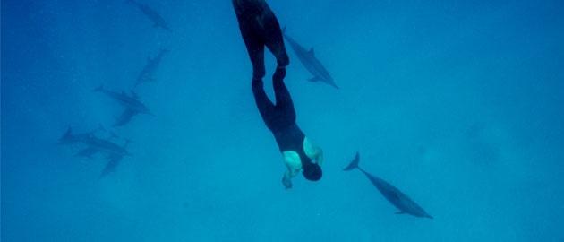 J'ai nagé avec les Dauphins