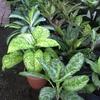 plante d appartement