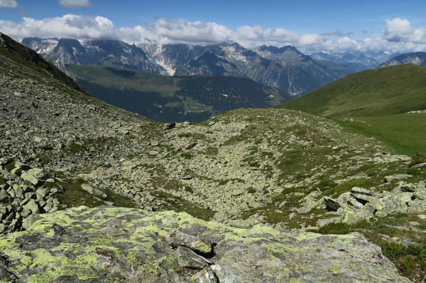 Au bord du chemin... le lichen géographique