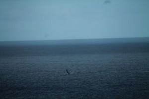 baleine-2888.JPG
