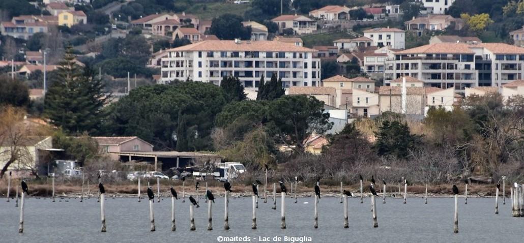 San Damianu - Réserve naturelle de Corse