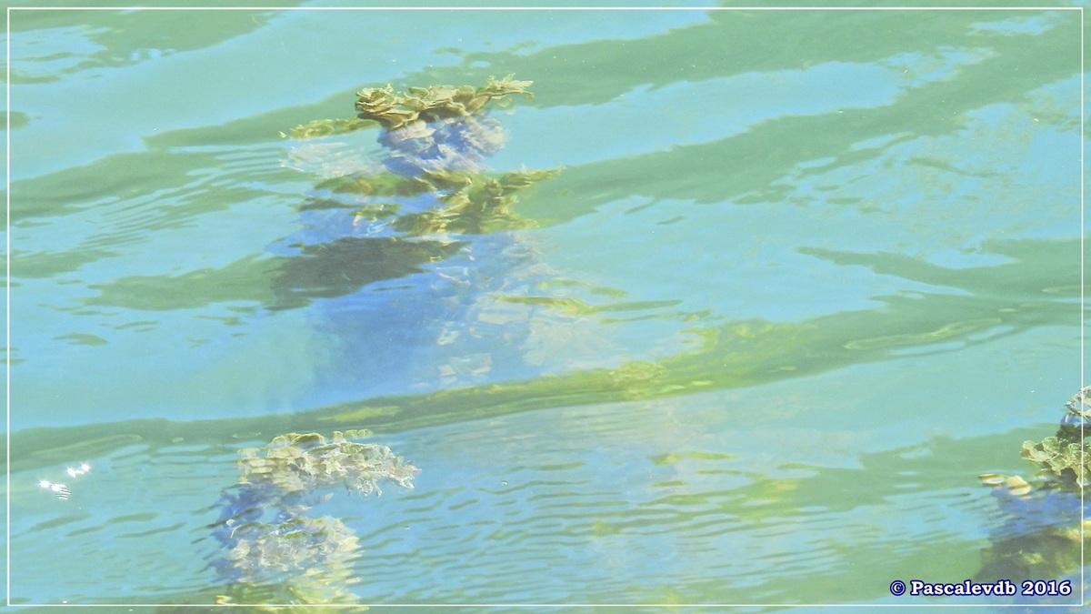 Le long du canal latéral à la Garonne - Août 2016 - 3/12