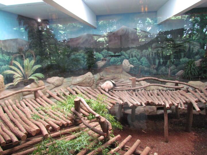 ZOOPARC DE BEAUVAL . SUR LES HAUTEURS DE CHINE ET LA PLAINE DES ELEPHANTS . Quatrième partie .