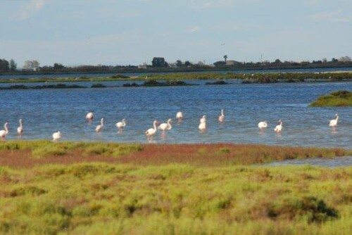 Quelques flamands roses