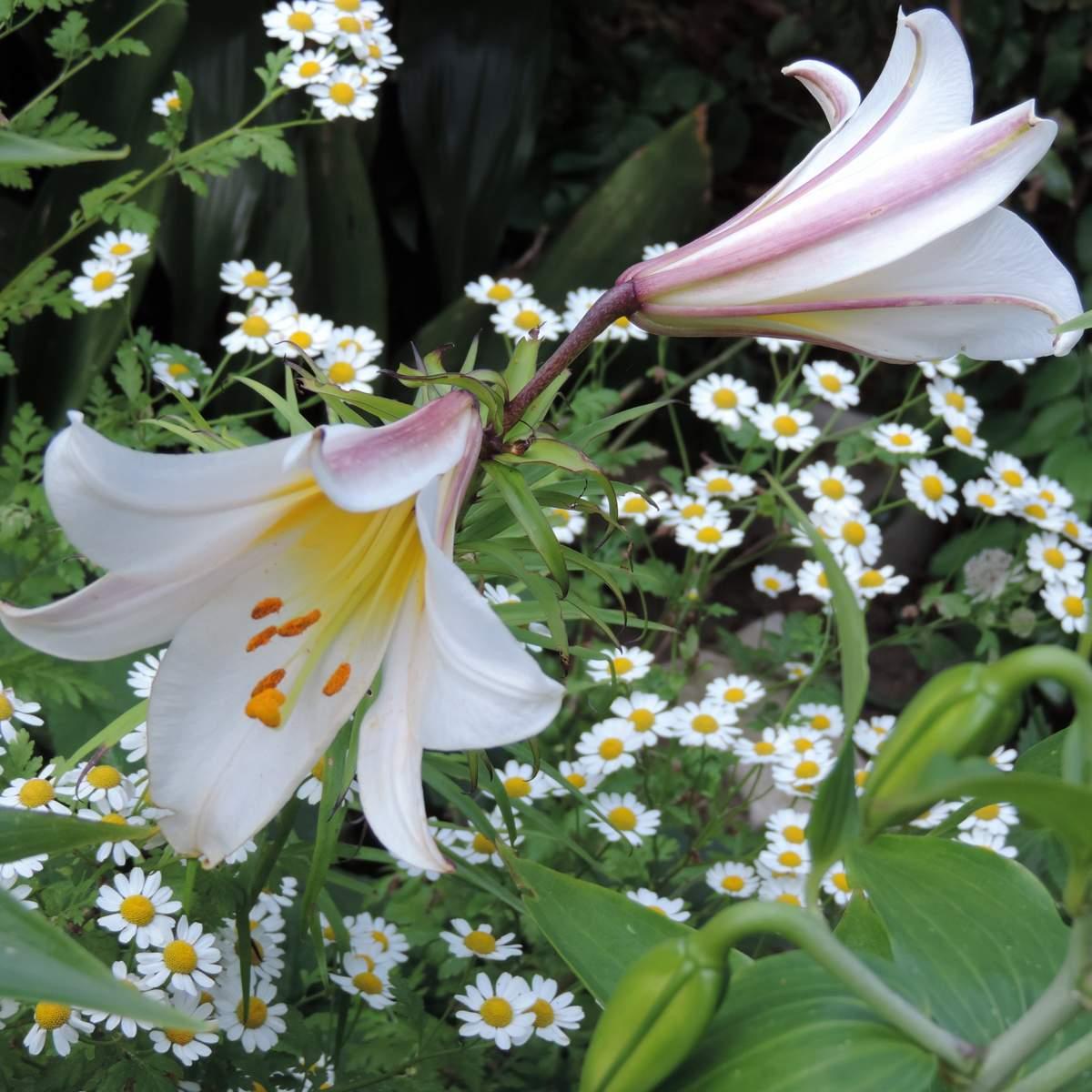 Fleurs en juillet...