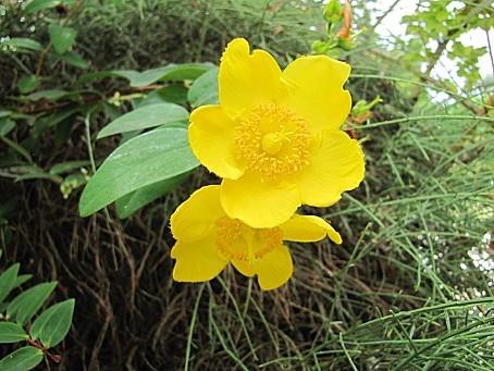 fleurs-4797.JPG