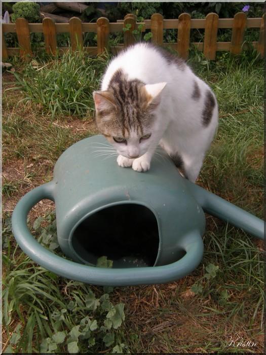 Arrosoir et chats