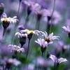 fleurs_147.jpg