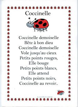 Sciences : Les insectes - LA COCCINELLE PS MS