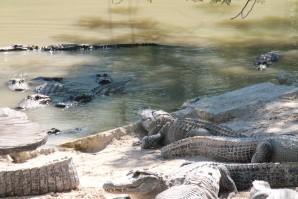 Everglades 2317