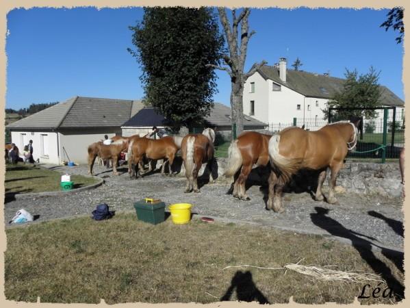 P8213358 chevaux
