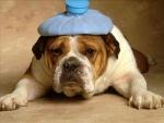 Les migraines AVF ou l'algie vasculaire de la face selon wikipédia