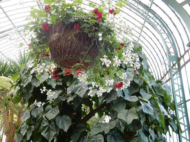 Beauté florales des serres royales