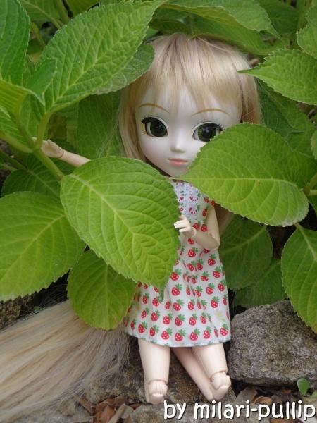 Séance photo 20 : Dans les hortensias