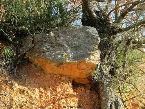 un caillou en équilibre contre un chêne