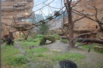 Zoo Osnabruck d50 2012 270