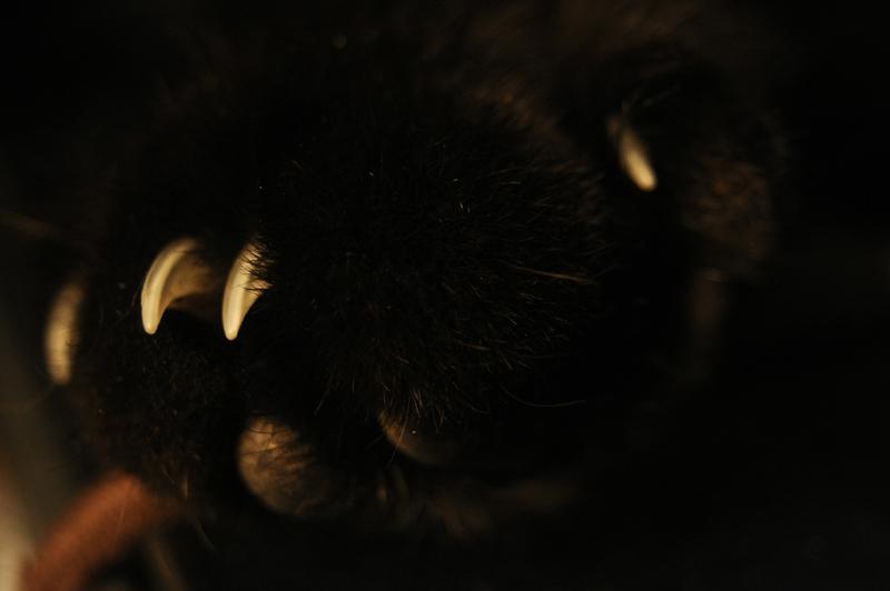 griffes de chat