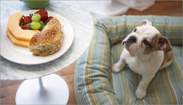 aliments toxiques animaux610 10 aliments toxiques pour vos animaux de compagnie