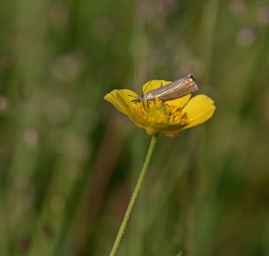 Insectes-papillons-5-5946.jpg